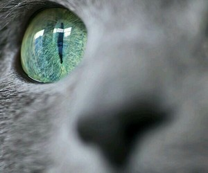 cat, eyes, and eye image
