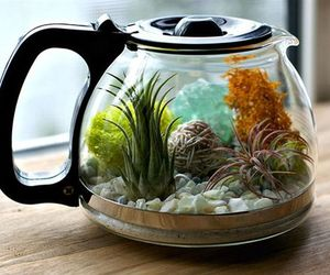 diy and terrarium image