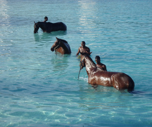 horse, men, and nature image