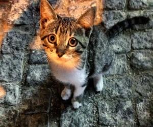 cat, kedi, and love image