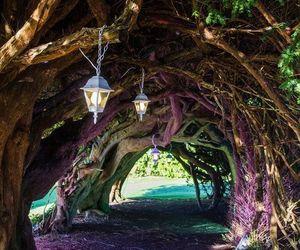 tree, lantern, and nature image
