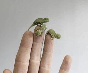 animal, chameleon, and aesthetic image