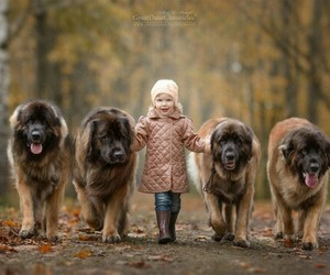 child, dogs, and photography image
