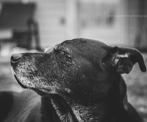dogs, photo of the day, and pet portrait image
