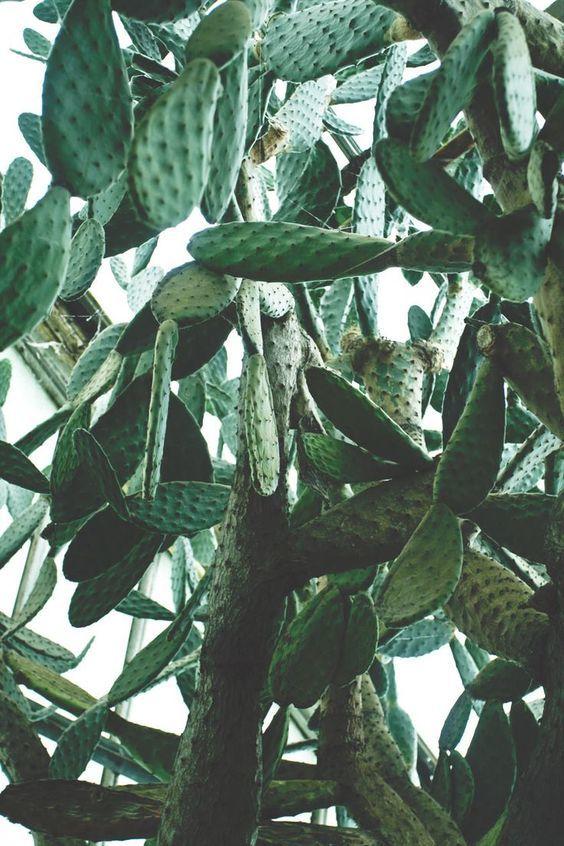 cactus, plants, and succulent image
