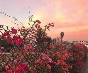 flowers, sunset, and pink sky image