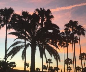 air, beautiful, and palmtree image