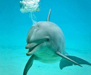 dolphin, sea, and cute image