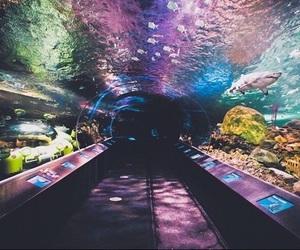 aquarium, fish, and colors image