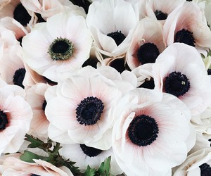 flowers, black, and pink image