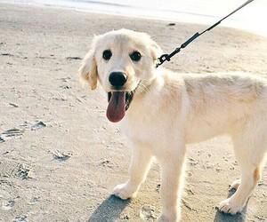 animals, dog, and beach image