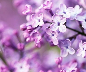 flower, spring, and lovely image