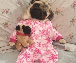 dog and pug image
