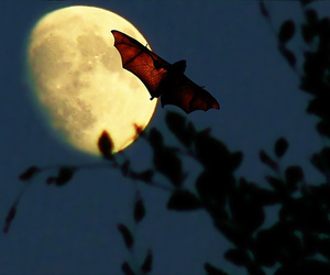 bat, moon, and night image
