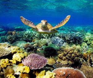 turtle, ocean, and coral image