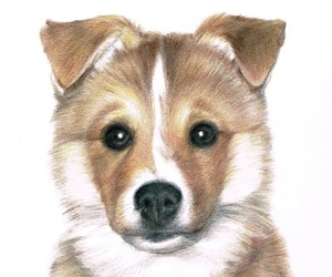 animal art, collie, and colored pencil image