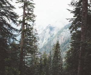nature, forest, and landscape image