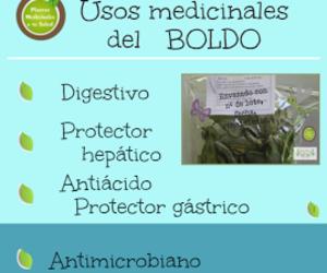 boldo, yuyos, and plantas medicinales image