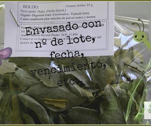 yuyos, plantas medicinales, and boldo image