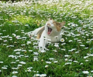 adorable, aesthetic, and flowers image