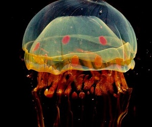 jellyfish, theme, and aesthetic image