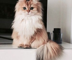 cat, furry, and fluffy image