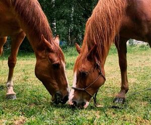 animal, animals, and farm image