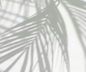 white, shadow, and palms image