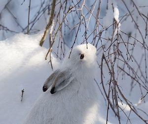winter, snow, and rabbit image
