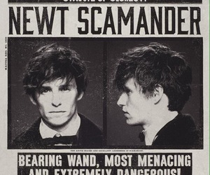 newt scamander, wanted, and fantastic beast image