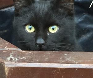 black, eyes, and cat image