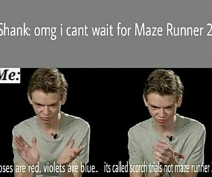 maze runner, funny, and newt image