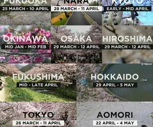 cherry blossoms, fukuoka, and japan image