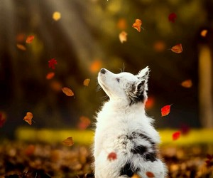dog, autumn, and fall image