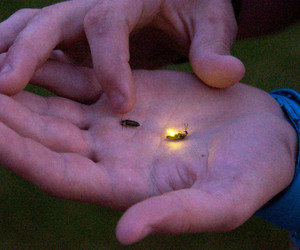 alternative, fireflies, and nature image