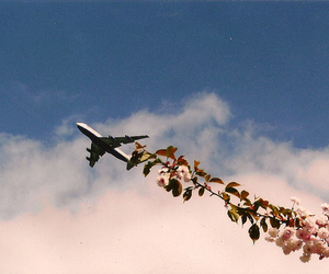 flowers, sky, and airplane image