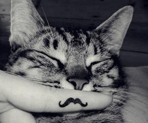 cat, mustache, and moustache image