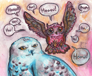 art, owl, and pig image