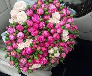 flowers, roses, and beauty image