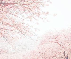 pink, flowers, and sakura image