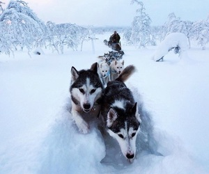 adventure, winter, and dogs image