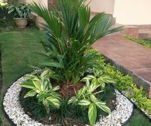 palmera and patio image