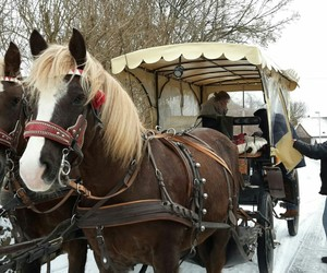 dresden, horses, and snow image
