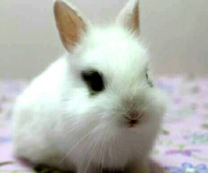 baby, bunny, and cute image