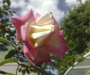garden, rosas, and rosa y blanco image