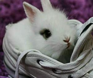 bunny, rabbit, and sweet image