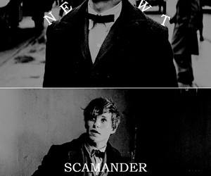 newt scamander, harry potter, and fantastic beasts image