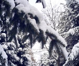 kick, pinetree, and snow image