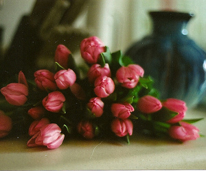 flowers, tulips, and photography image