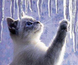 cat, winter, and kitten image